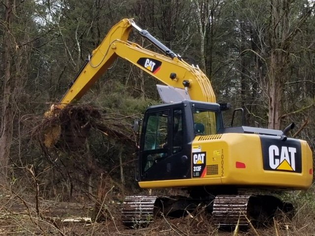 Tree Service – Discover What They Can Offer You